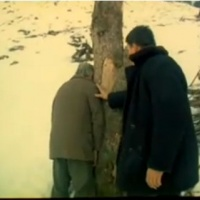 Tapinarii (The Wood Cutters) @ Romanian Cinematheque. Followed by Q&A with director Ioan Carmazan